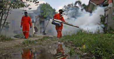 El brote de dengue en el sudeste asiático explota en la lucha contra el virus corona