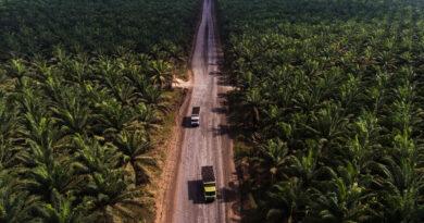 Unilever en el piloto de datos para revisar la deforestación en su cadena de suministro