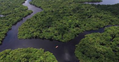 Los acaparadores de tierras amazónicas atacan el paraíso del ecoturismo en Brasil