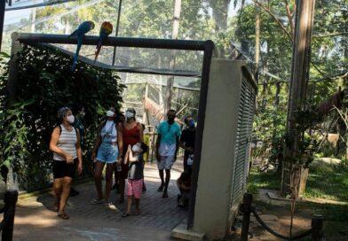 El último guacamayo salvaje de Río está solo y busca el amor